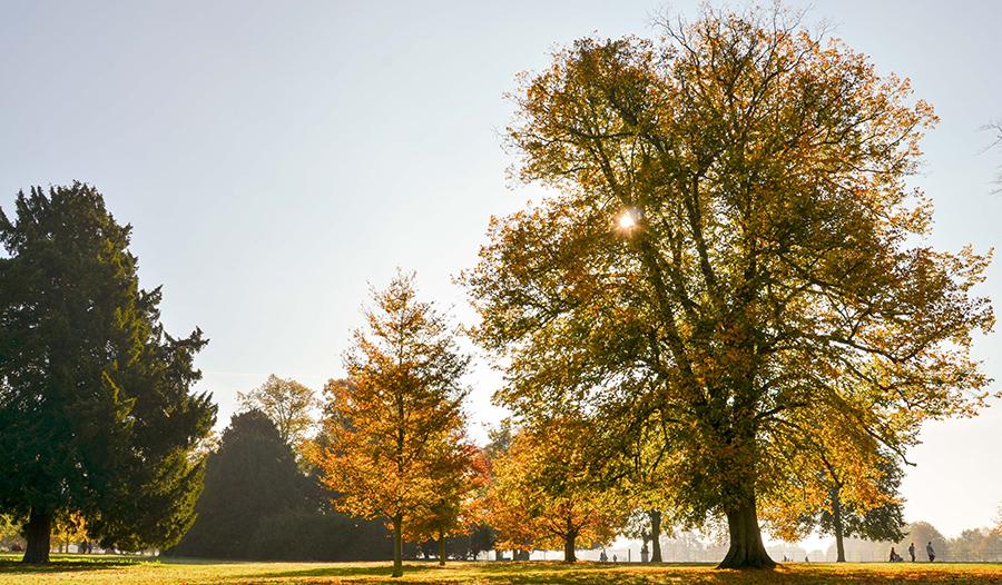 landscape, photography, photographer, flisher photography