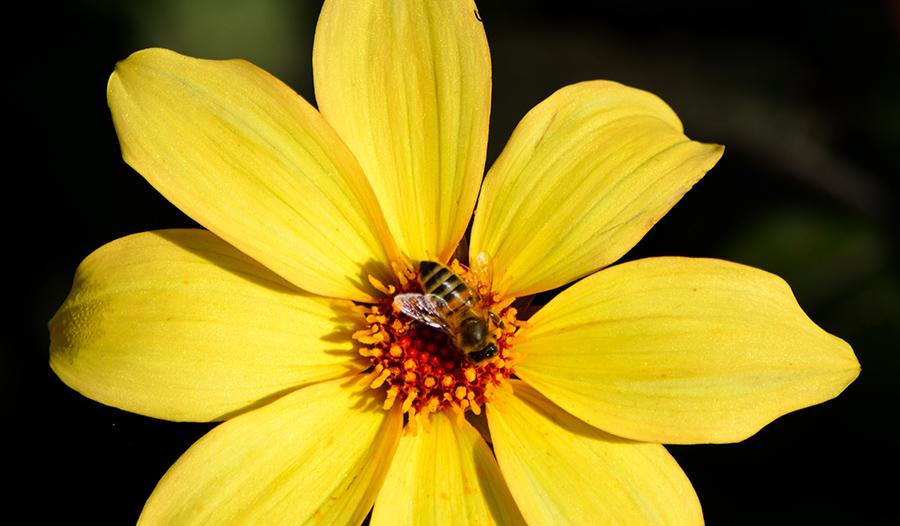 wildlife, photography, photographer, flisher photography