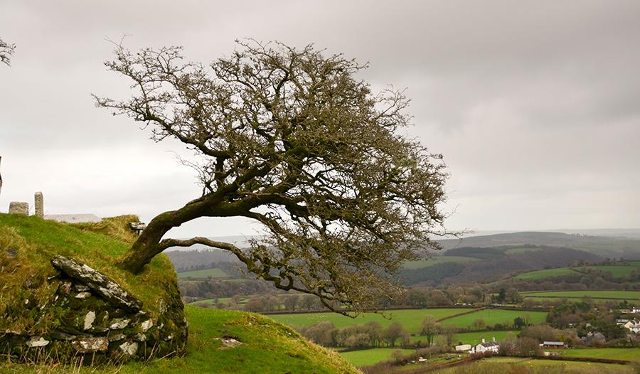 landscape, tree, photography, photographer, flisher photography